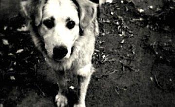 В Днепродзержинске начали строить приют для бездомных животных