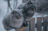 Стало известно, какой будет зима на Днепропетровщине