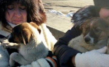 В Днепре сотрудники ГосЧС спасли застрявших в бетоне щенков