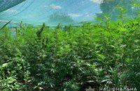 210 кустов: в Верхнеднепровском районе обнаружили плантацию конопли