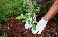 """В рамках проекту """"Озеленення планети"""" в лісництвах Дніпропетровщини висадили близько 100 тис. саженців"""