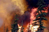 Днепропетровские спасатели сутки боролись с лесным пожаром