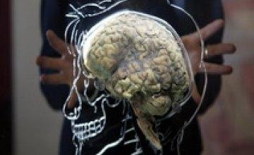 Американские ученые «вырастили» в лаборатории человеческий мозг