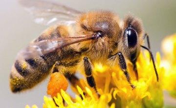 В Днепропетровской области мужчину до смерти зажалили пчелы