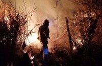 На Днепропетровщине сгорело 1,5 га камыша и сухой травы