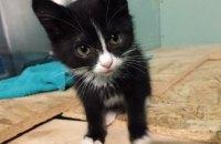 Онлайн-база потерянных животных: котенок и 3 собаки ищут своих хозяев (ФОТО)