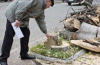 За сутки в Днепропетровской области в результате падения деревьев пострадали 4 человека