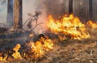 В 2020 году на Днепропетровщине произошло 130 лесных пожаров