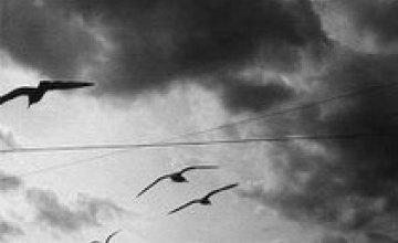 Синоптики пообещали Днепропетровску облачные и холодные выходные