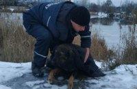В Днепре спасли собаку, провалившуюся под лед (ФОТО)