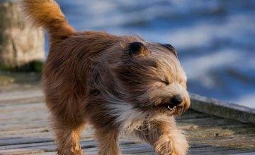 Сегодня на Днепропетровщине ожидаются сильные порывы ветра