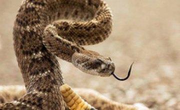 Американец может лишиться руки из-за селфи с гремучей змеей