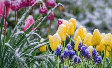 Ночью 23 апреля на Днепропетровщине ожидаются заморозки