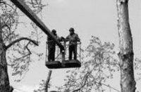 В Днепропетровске на Макарова ликвидировали сухостои