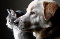 В Днепре можно бесплатно стерилизовать бездомных животных
