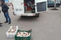 В Кривом Роге нарушитель пытался реализовать более 360 кг рыбы, - Днепропетровский рыбоохранный патруль