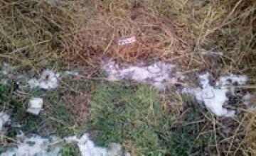 В Павлоградском районе местный житель во время пьянки убил своего собутыльника