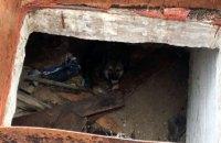 Спасатели Кривого Рога помогли щенку выбраться из ловушки