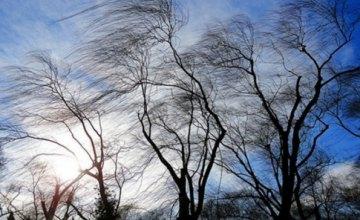 ГСЧС предупреждает о порывах ветра в Днепропетровской области