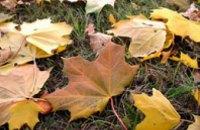 Изобретатель из Днепра придумал, как заработать на опавших листьях