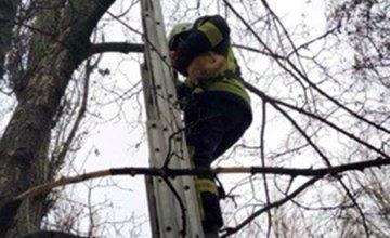 На Днепропетровщине пожарные сняли кота с 6-метровой высоты