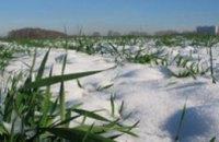 Озимые посевы войдут в зиму незакаленными, - гидрометцентр