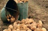 В хозяйствах Днепропетровской области собрали более 207 тыс тонн картофеля
