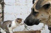 Вместо приюта для бездомных животных в Днепропетровске для них построят кладбище
