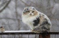 Синоптики предупреждают об ухудшении погодных условий на Днепропетровщине