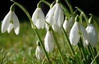 Подснежники и шафран - под запретом: торговля редкими растениями наказывается штрафом