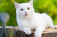 В Днепре  спасатели сняли котенка с высокого дерева (ВИДЕО)