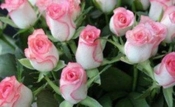 В Украине одна роза будет стоить до 80 грн