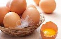 Израиль из-за сальмонеллы прекратил закупку яиц из Украины