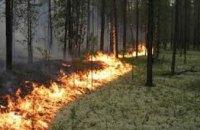 В Днепропетровской области горит лес: площадь пожара достигла 50 га