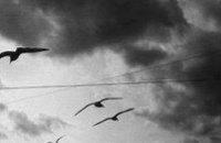 Сегодня в Днепропетровске дождь и ветер