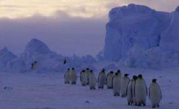 От антарктических льдов скоро отколется крупнейший айсберг, - ученые