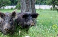В заповеднике Павлоградского химзавода  ждут пополнение: оленей, диких свиней и бизона