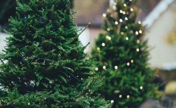 В Днепре определены пункты приема новогодних елок