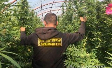 На Днепропетровщине мужчина высадил в теплице конопли почти на 2 миллиона гривен (ВИДЕО)